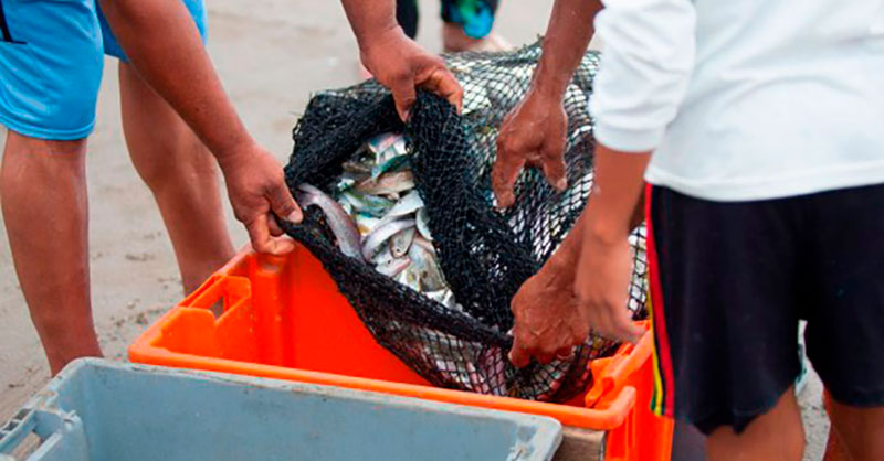 Target 75 Forum: Public-private partnerships key to seafood sustainability